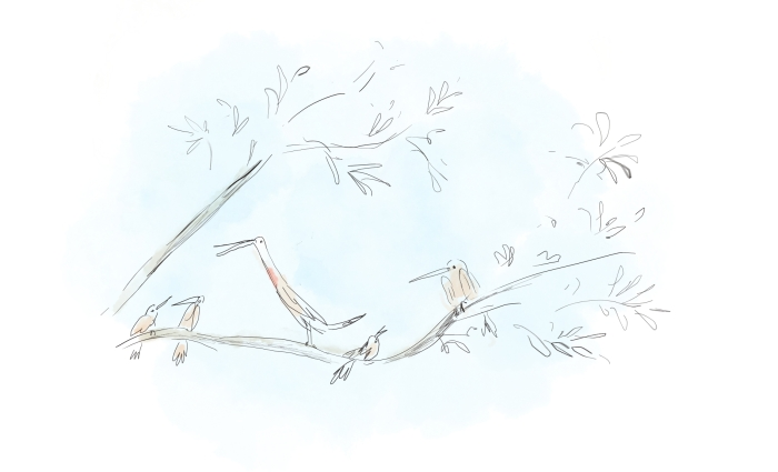 droles-d'oiseaux-presentation.jpg